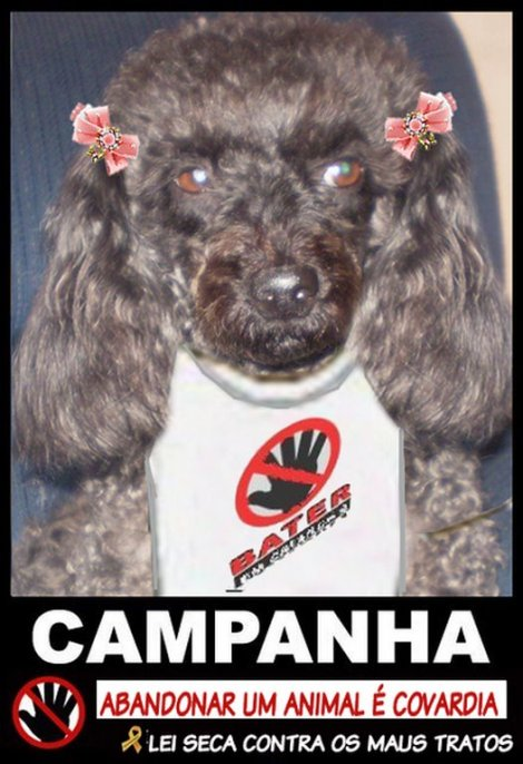 camapanha