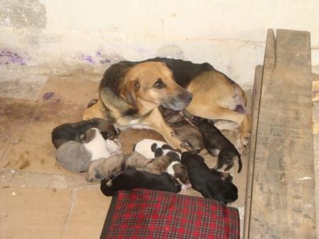 a mamãe de Guararema e seus 5 filhotes