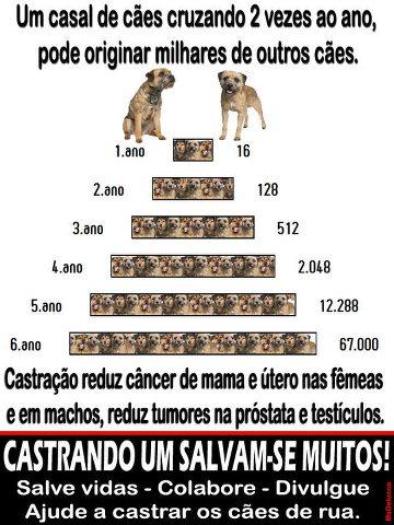 CAMPANHA DE CASTRAÇÃO ADOTE JÁ E CLINICA É O BICHO