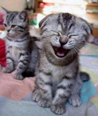 ong adote já tem duas vagas para gatinhos