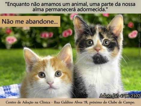 Banner Adoção Clinica